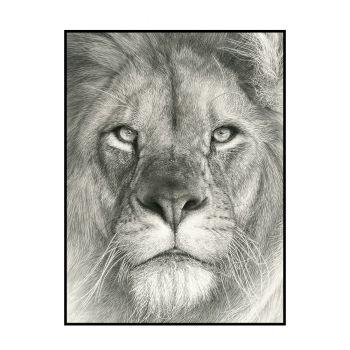 Der Löwe | Limitierte Edition von Koshi Takagi