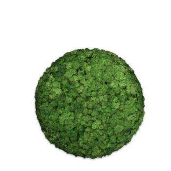 Moos Convex Circle ø30cm apfelgrün
