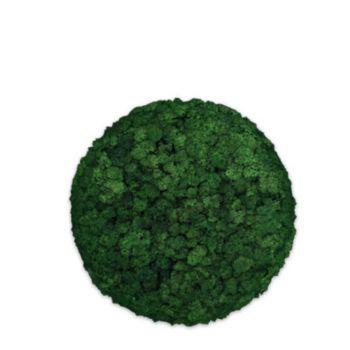 Moos Convex Circle ø30cm moss