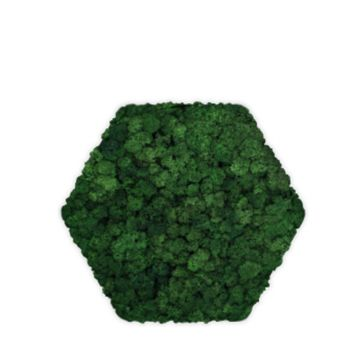 Moos Convex Hexagon ø30cm moss