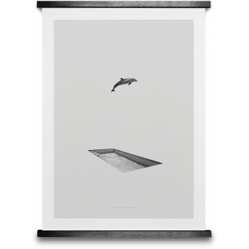Dolphin & pool 50x70cm
