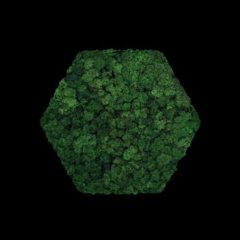 Moos Convex Hexagon ø30cm moss