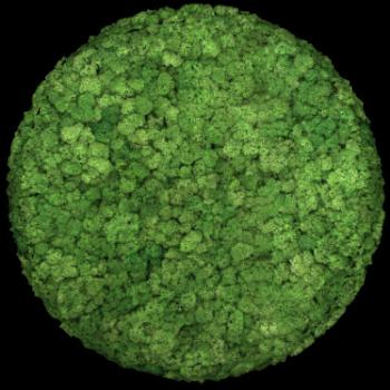 Moos Convex Circle ø45cm apfelgrün