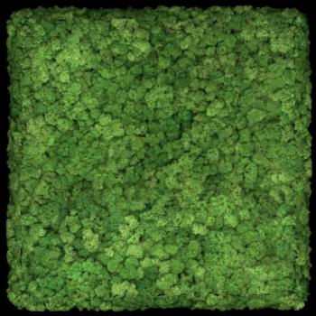 Moos Convex Square 45cm apfelgrün