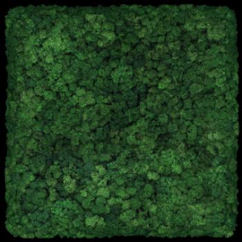 Moos Convex Square 45cm moss