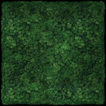 Moos Convex Square 60cm moss
