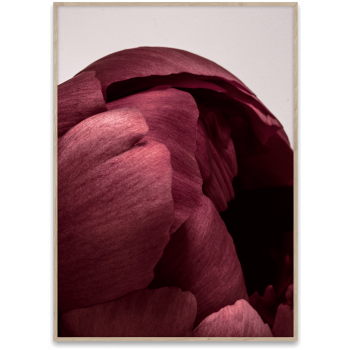 Peonia 01 70x50cm
